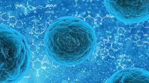 HBOT zwiększa ośmiokrotnie ilość komórek macierzystych